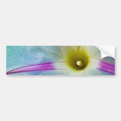 Morning Glory Bumper Sticker