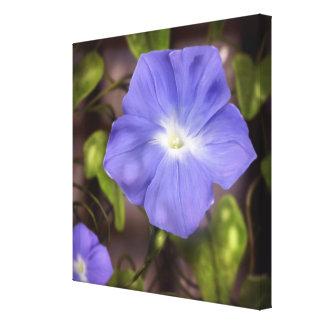Morning Glory - Flower Art Canvas 24x24