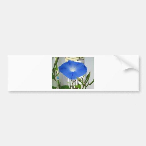 Morning Glory Flower Bumper Sticker