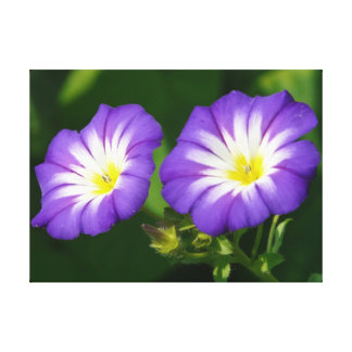 Morning glory flower canvas print