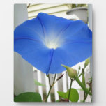 Morning Glory Flower Photo Plaques