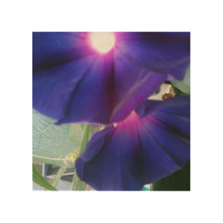 Morning Glory Flower Wood Print