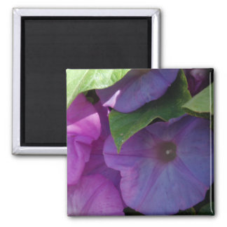Morning Glory Flowers Magnet