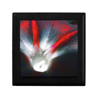 Morning Glory in red and black Gift Box