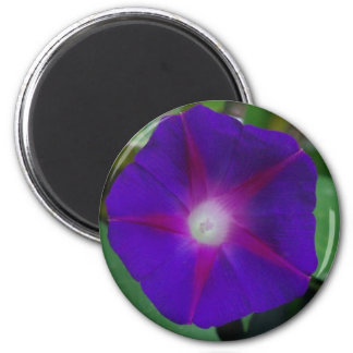 MORNING GLORY MAGNET