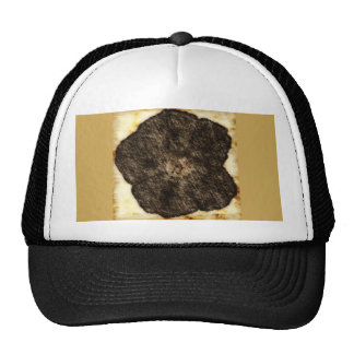 Morning Glory Old Time Sketch Trucker Hat
