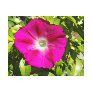 Morning Glory -- Pink with Green Leaves Canvas Print