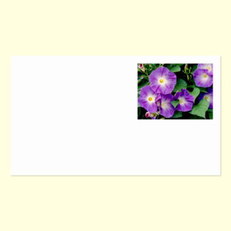Morning Glory - Purple Flowers Green Leaves Double-Sided Standard Business Cards (Pack Of 100)