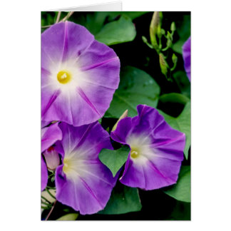 Morning Glory - Purple Flowers Green Leaves Greeting Card