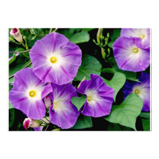 Morning Glory - Purple Flowers Green Leaves Invitations