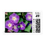 Morning Glory - Purple Flowers Green Leaves Postage