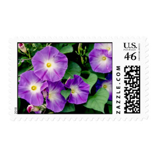 Morning Glory - Purple Flowers Green Leaves Postage Stamp
