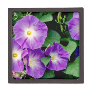 Morning Glory - Purple Flowers Green Leaves Premium Jewelry Box
