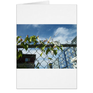 Morning Glory reaching for the sky Card