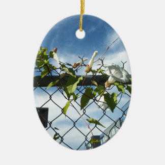 Morning Glory reaching for the sky Ceramic Ornament