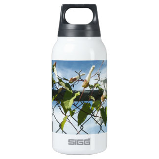 Morning Glory reaching for the sky Insulated Water Bottle