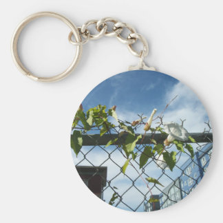 Morning Glory reaching for the sky Key Chain