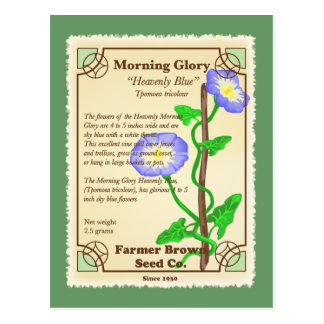 Morning Glory Seed Packet Postcard