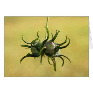 Morning Glory Seed Pod Card