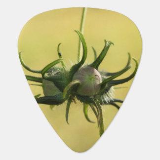 Morning Glory Seed Pod Guitar Pick