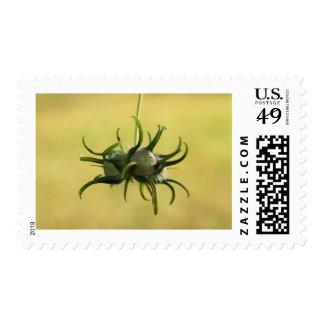 Morning Glory Seed Pod Postage Stamp