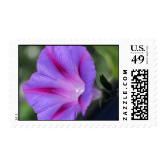 Morning Glory Stamp