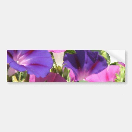 Morning Glory Vines Bumper Sticker