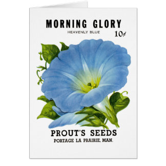 Morning Glory Vintage Seed Packet Cards
