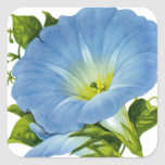 Morning Glory Vintage Seed Packet Square Sticker