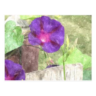 Morning Glory Watercolor Postcard