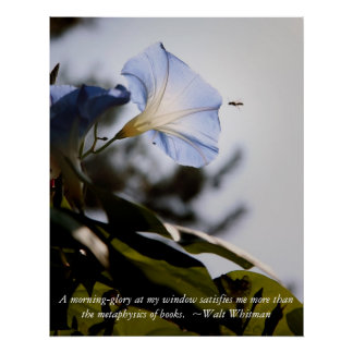 morning glory with Walt Whitman Qoute Poster