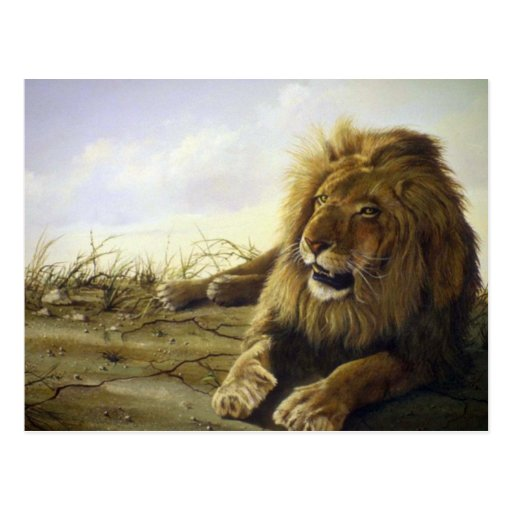 Morning glow, Lion Postcard