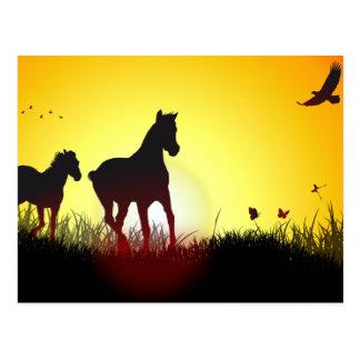 morning horses postcard
