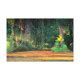 Morning in the redwood tree's canvas print