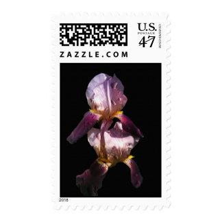 Morning Iris Postage