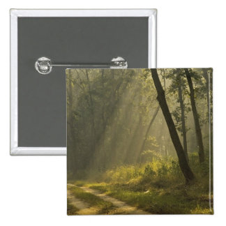 Morning light beams through trees in jungle 2 inch square button