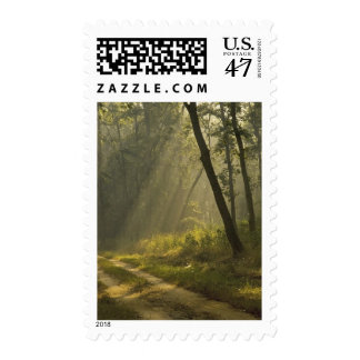 Morning light beams through trees in jungle postage