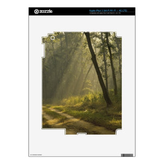 Morning light beams through trees in jungle iPad 3 decals