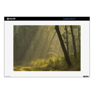 "Morning light beams through trees in jungle skin for 15"" laptop"