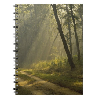 Morning light beams through trees in jungle spiral notebook