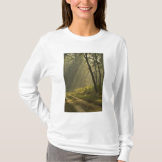 Morning light beams through trees in jungle T-Shirt