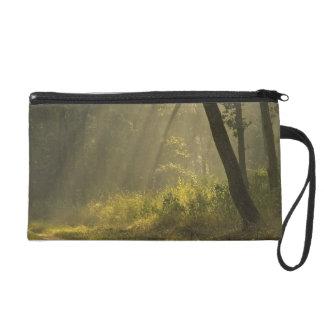 Morning light beams through trees in jungle wristlet purse