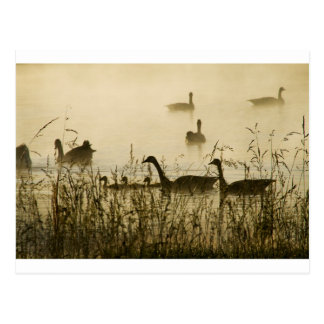 Morning Light Canadian Geese Pond Silhouette Postcard