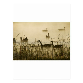 Morning Light Canadian Geese Pond Silhouette Postcards