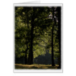 Morning Meadow & Trees Blank Cards
