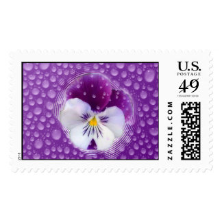 Morning Mist and Pansy Postage Stamp