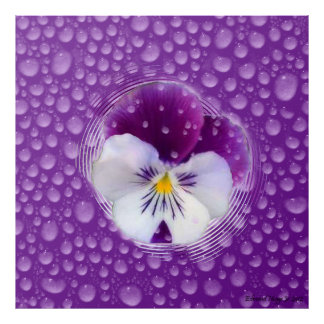 Morning Mist and Pansy Poster