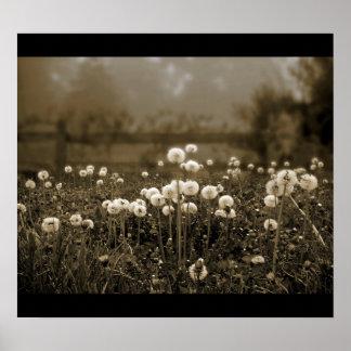 Morning Mist Dandelions poster