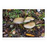 Morning Mushrooms Postcard