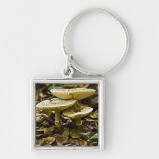 Morning Mushrooms Silver-Colored Square Keychain